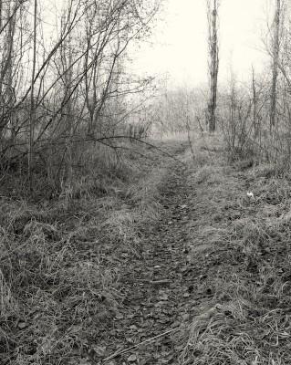 walk #46
