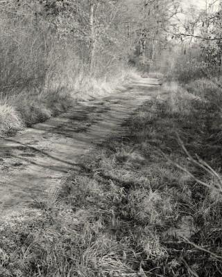 walk #47