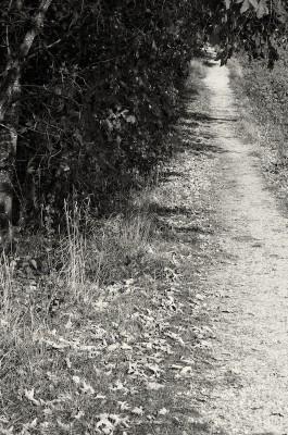 walk #6